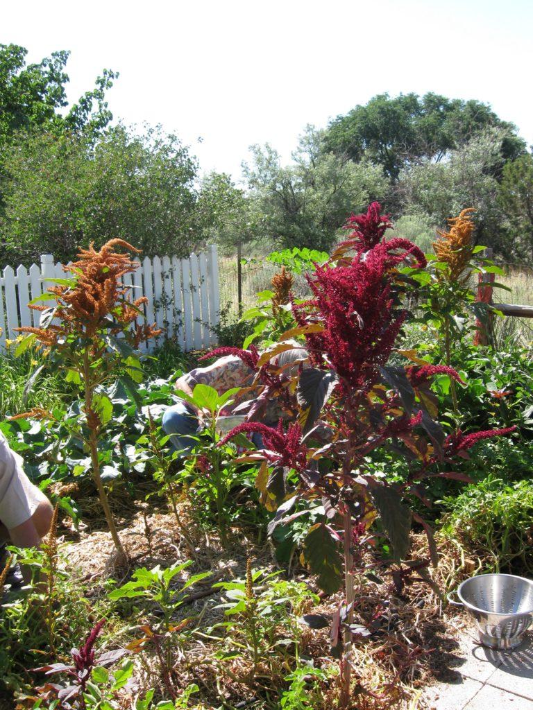 sams-garden